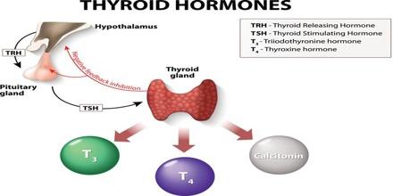 Thyroid Hormones Msrblog