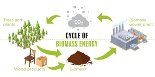 Biomass in Ecology